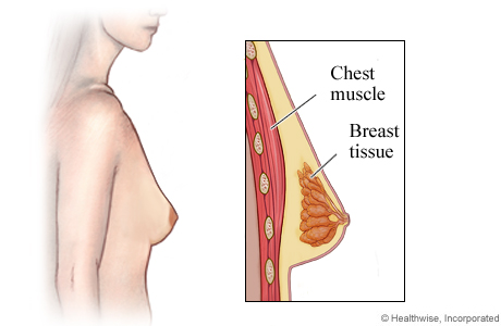 Side view of female breast with detail of chest muscle and breast tissue