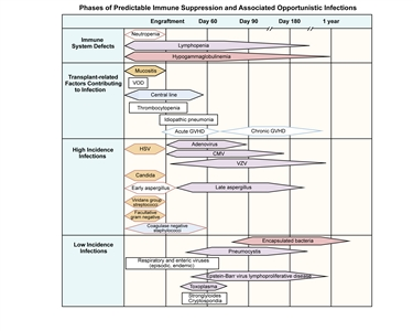 Chart showing phases of predictable immune suppression and associated opportunistic infections among allogeneic hematopoietic stem cell transplantation recipients.