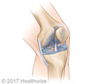 The bones and ligaments of the knee